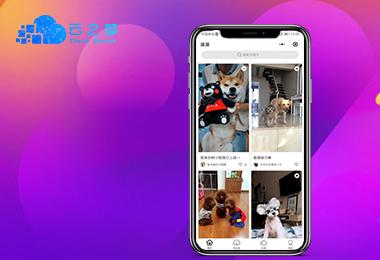 河南云之梦宠物社交app开发解决方案_app开发定制公司