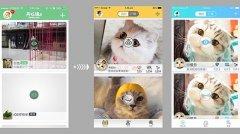 宠物商城app开发解决方案_河南云之梦